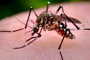 http---centrosconacyt.mx-wp-content-uploads-2015-09-Aedes-Aegypti_OC