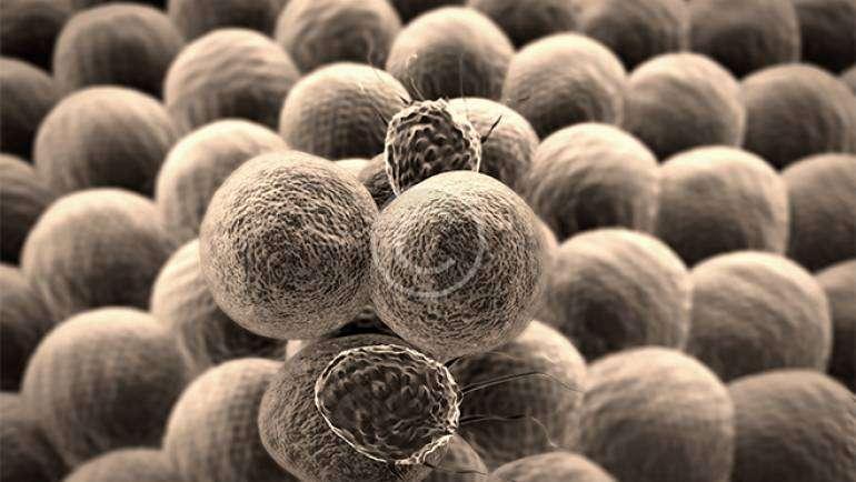 Antibody Development…
